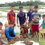 গৌরীপুরে মাওহা পল্লীর সড়কে তালের বীজ রোপন